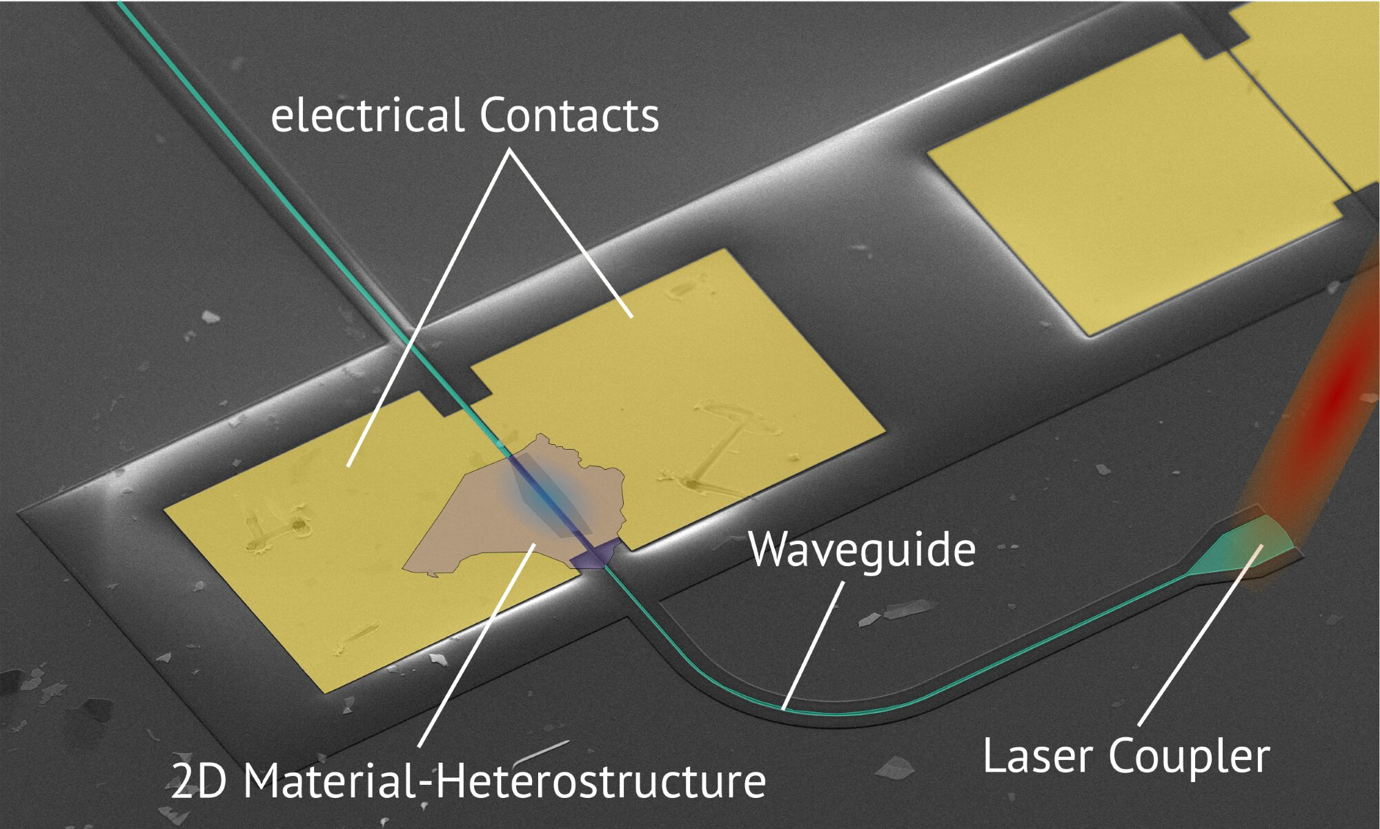 A fast light detector made of two-dimensional materials