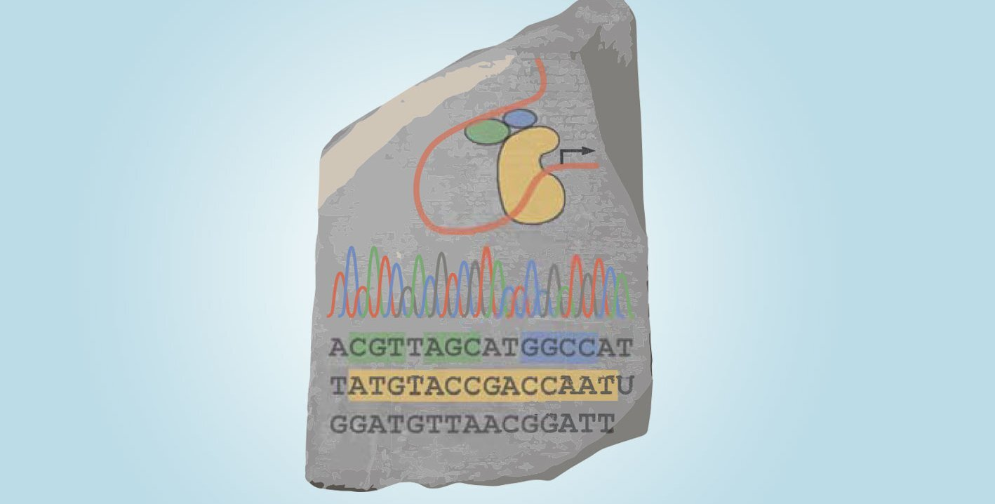 A 'genomic rosetta stone' for discovering the rules of gene regulation