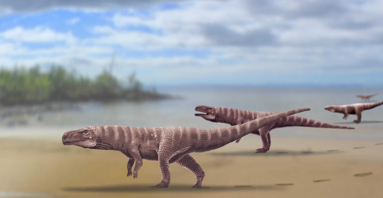 Ancient Crocodiles Walked On Two Legs Like Dinosaurs