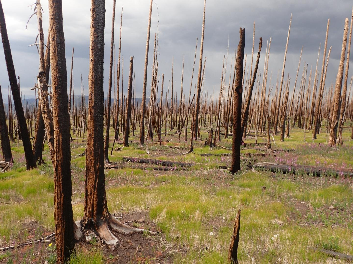 photo of As wildfires flare up across West, research highlights risk of ecological change image