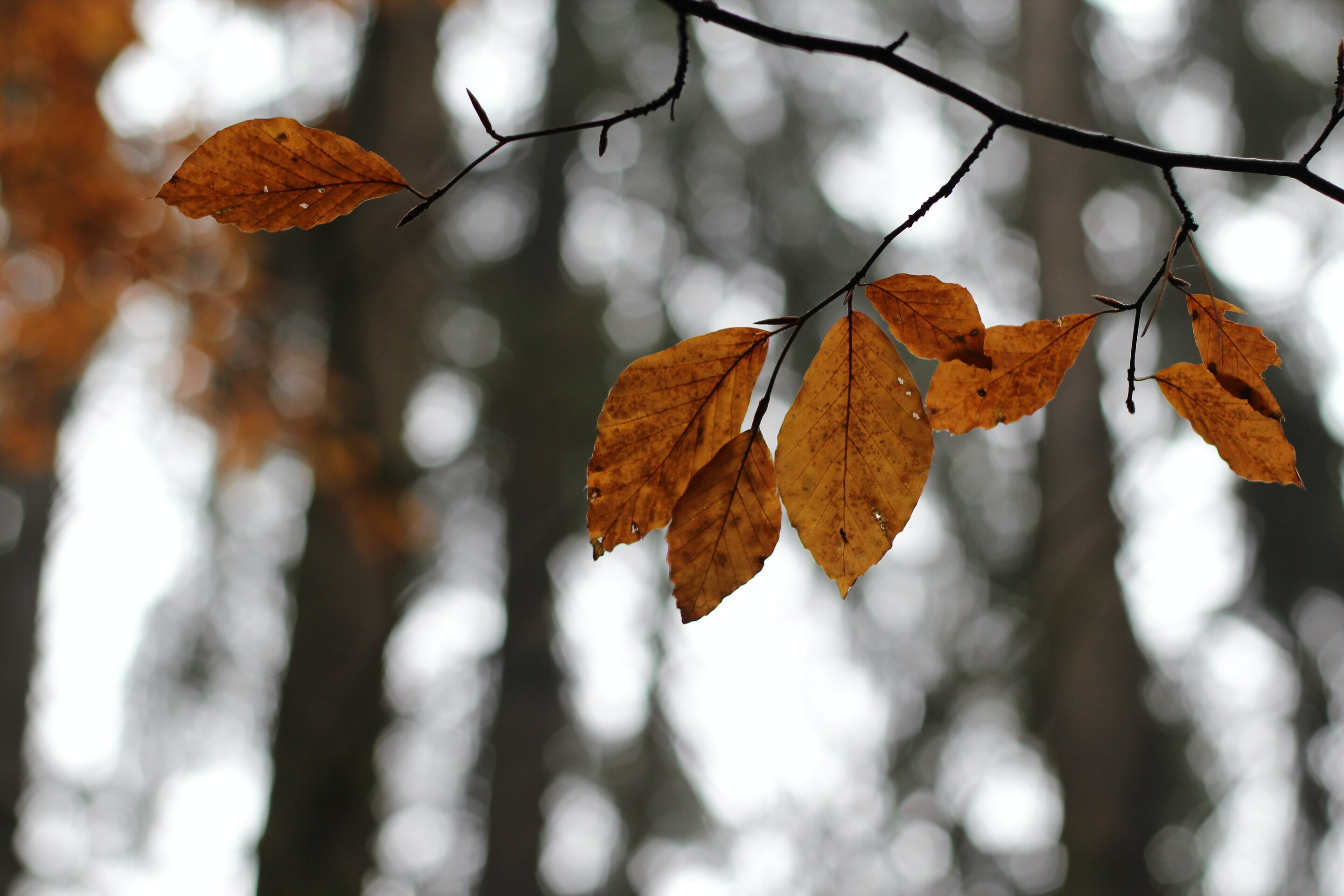 Climate change is making autumn leaves change colour...