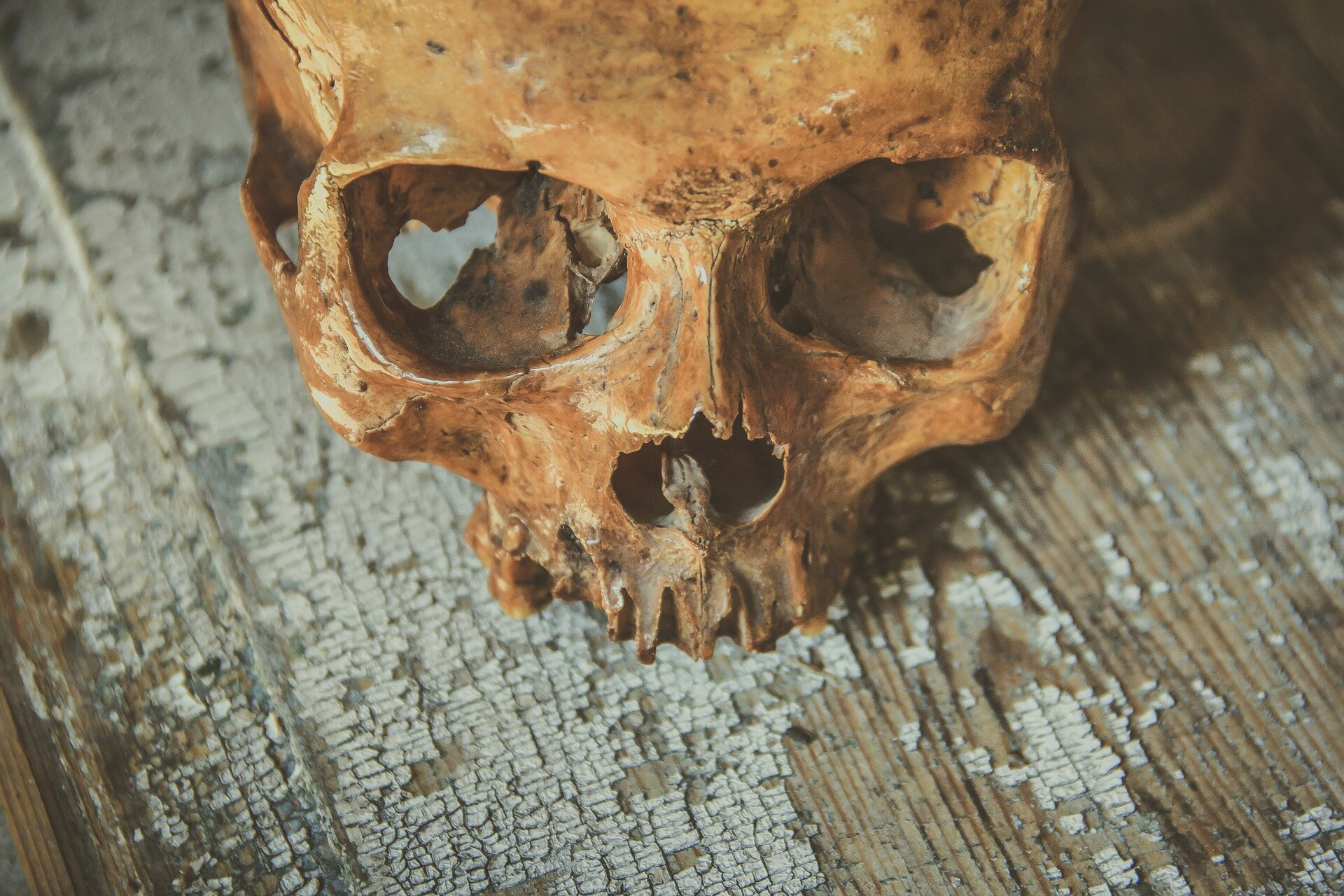 Bone proteomics could reveal how long a corpse has been underwater
