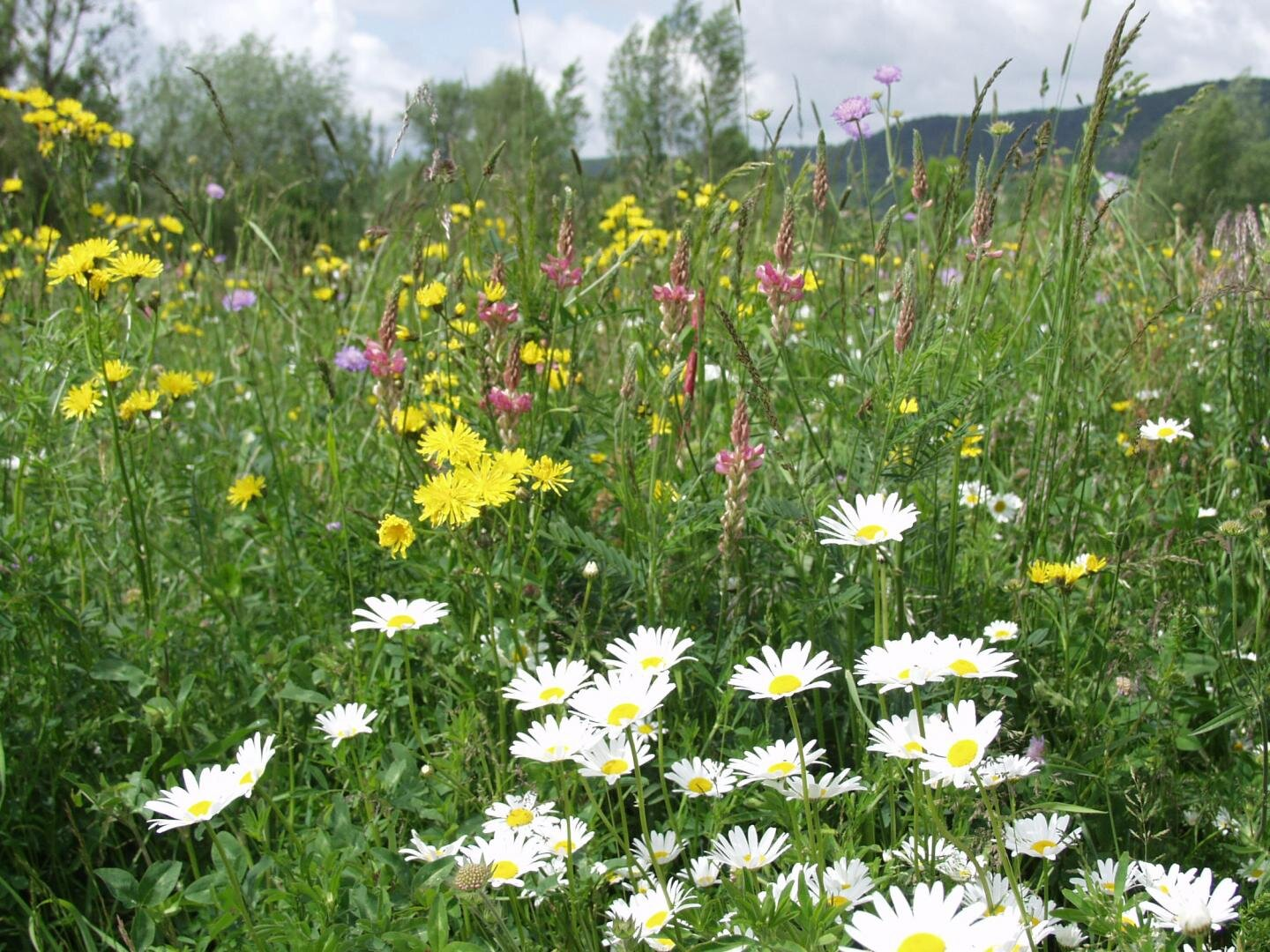 Biodiversity increases the efficiency of energy use in grasslands