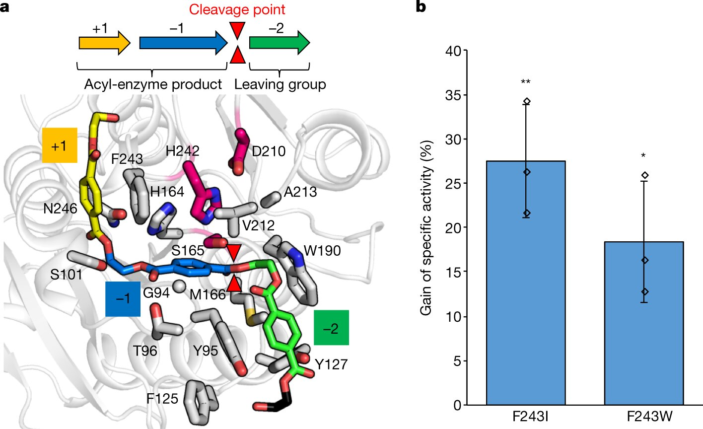 Engineered enzyme able to break down PET in ten hours
