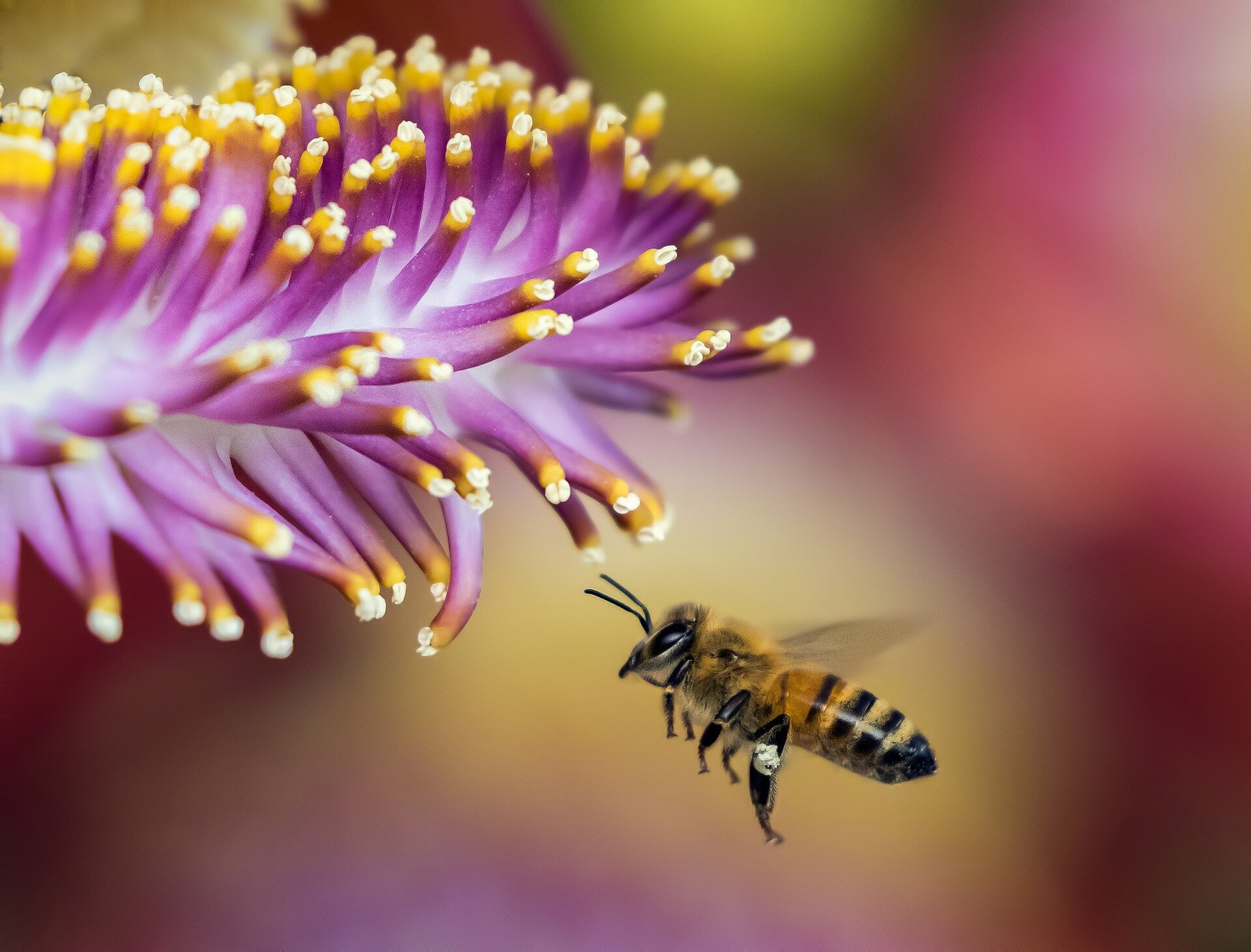 Royal jelly does not a queen make