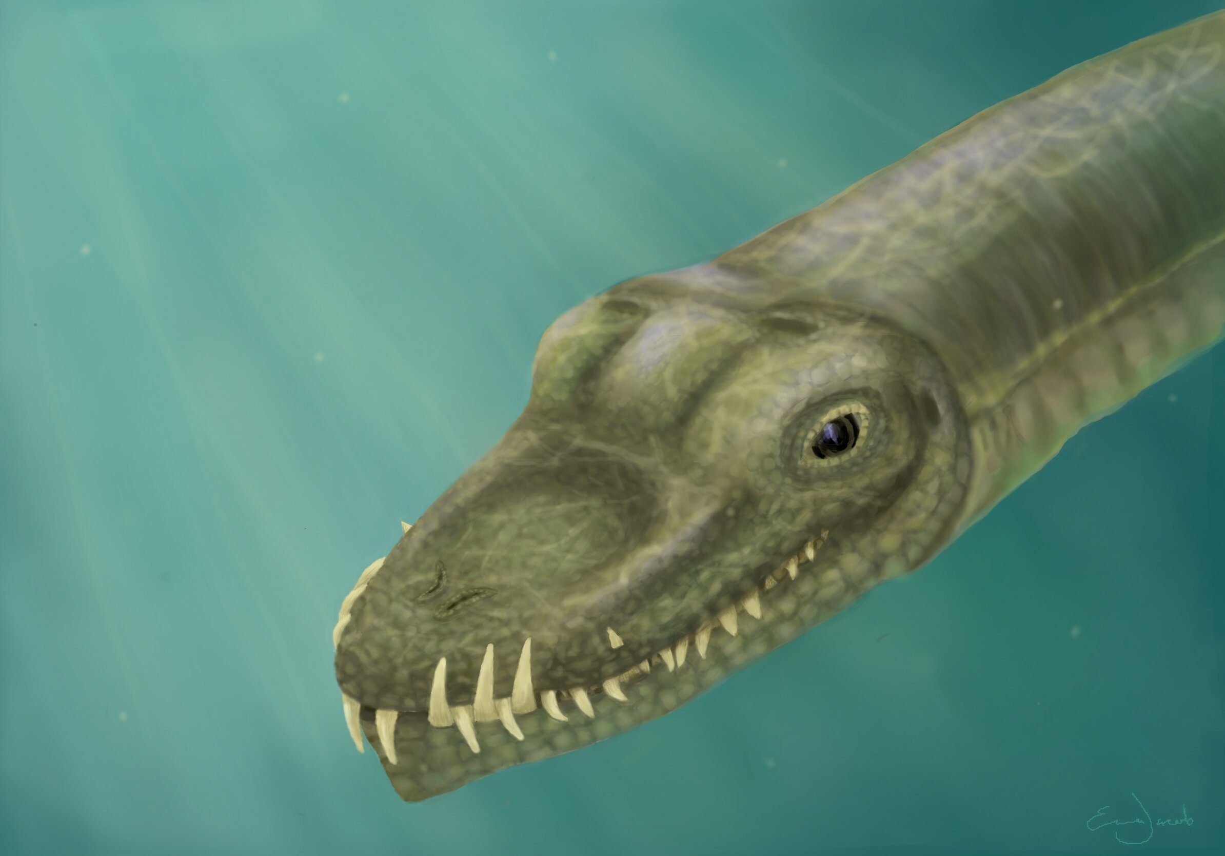 Fossil mystery solved: Super-long-necked reptiles lived in the ocean, not on land