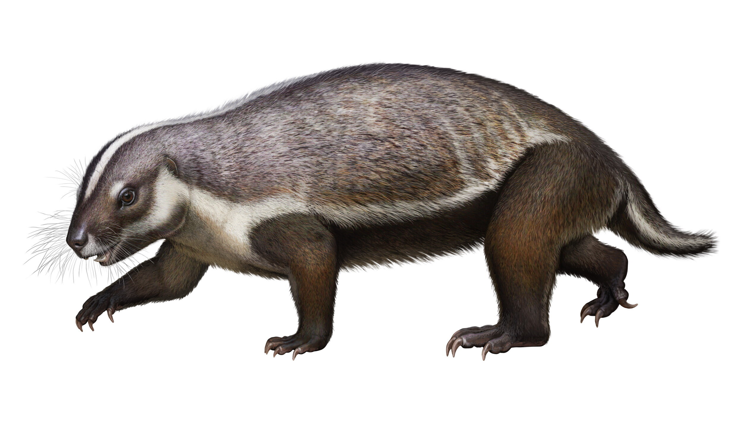 Marooned on Mesozoic Madagascar: Researchers discover 66-million-year-old 'crazy beast'