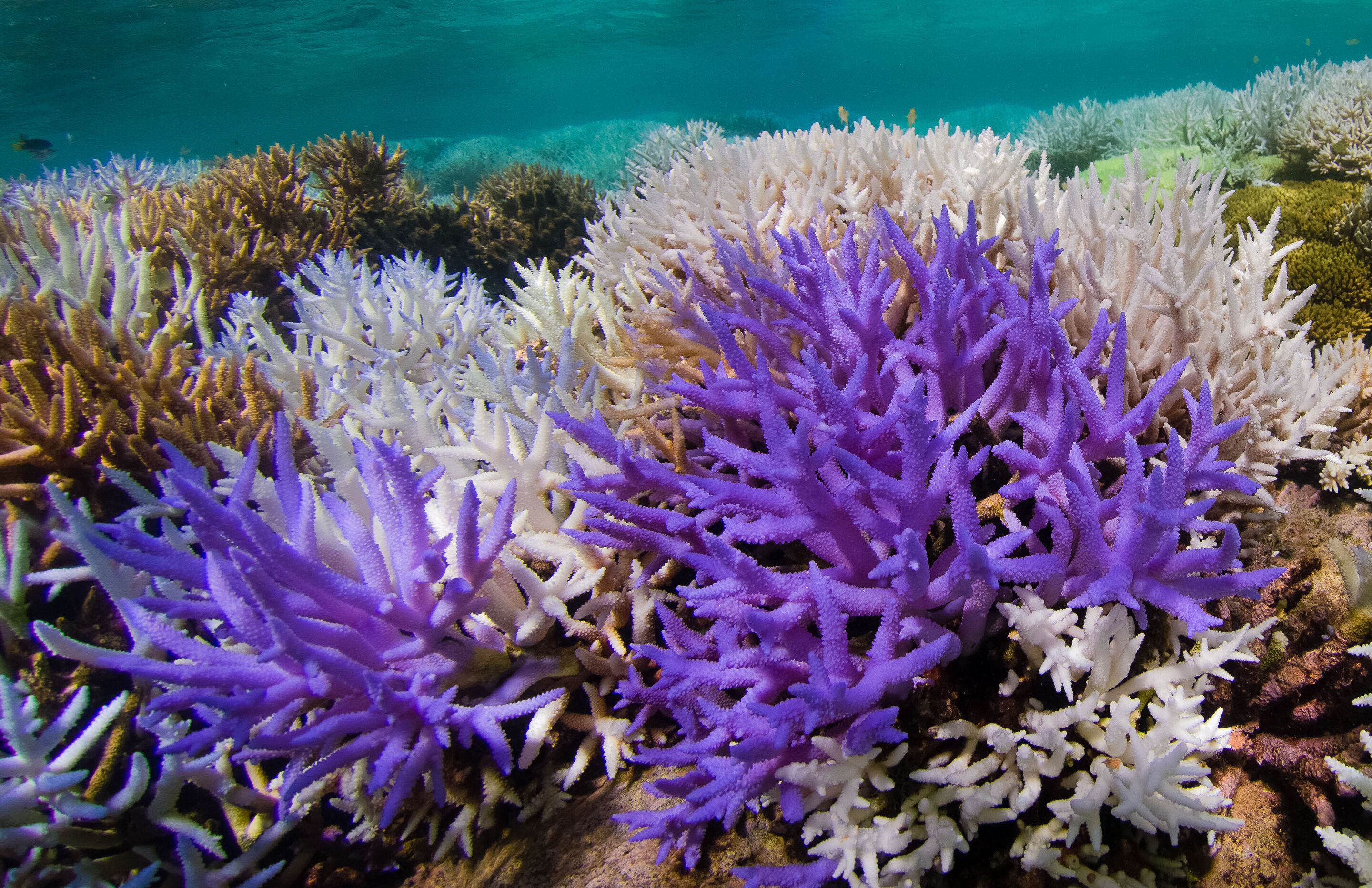 Mysterious glowing coral reefs are fighting to recover
