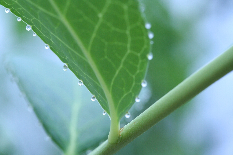 Bio- cover image