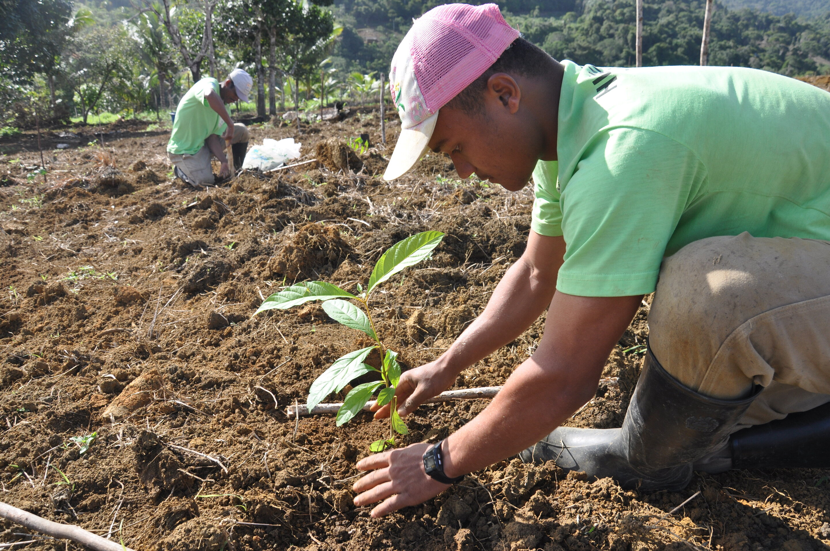 Planting trees is no panacea for climate change, ecologist writes ...