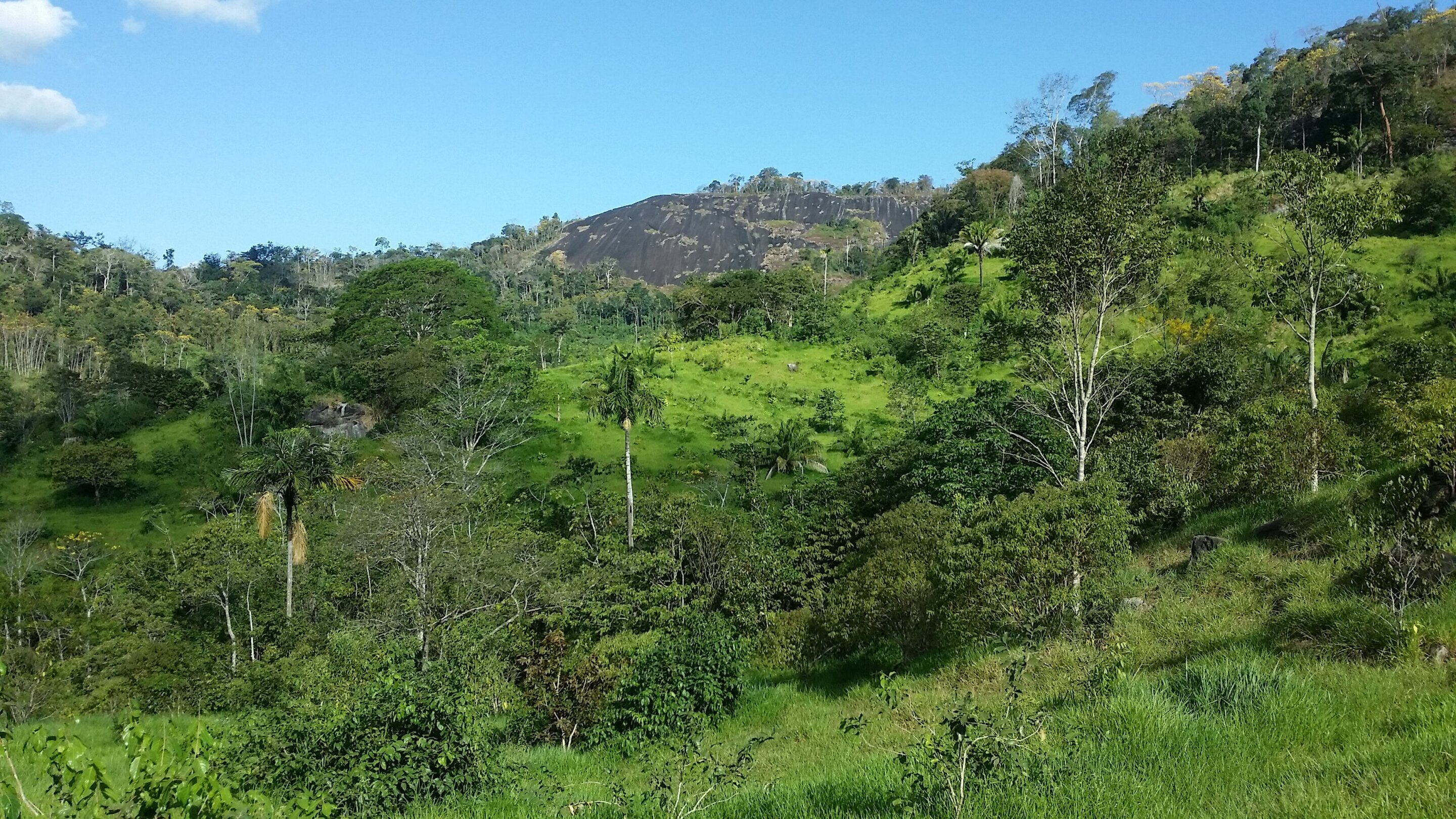 Regenerated forests offset 12% of carbon emissions in Brazilian Amazon in 33 years