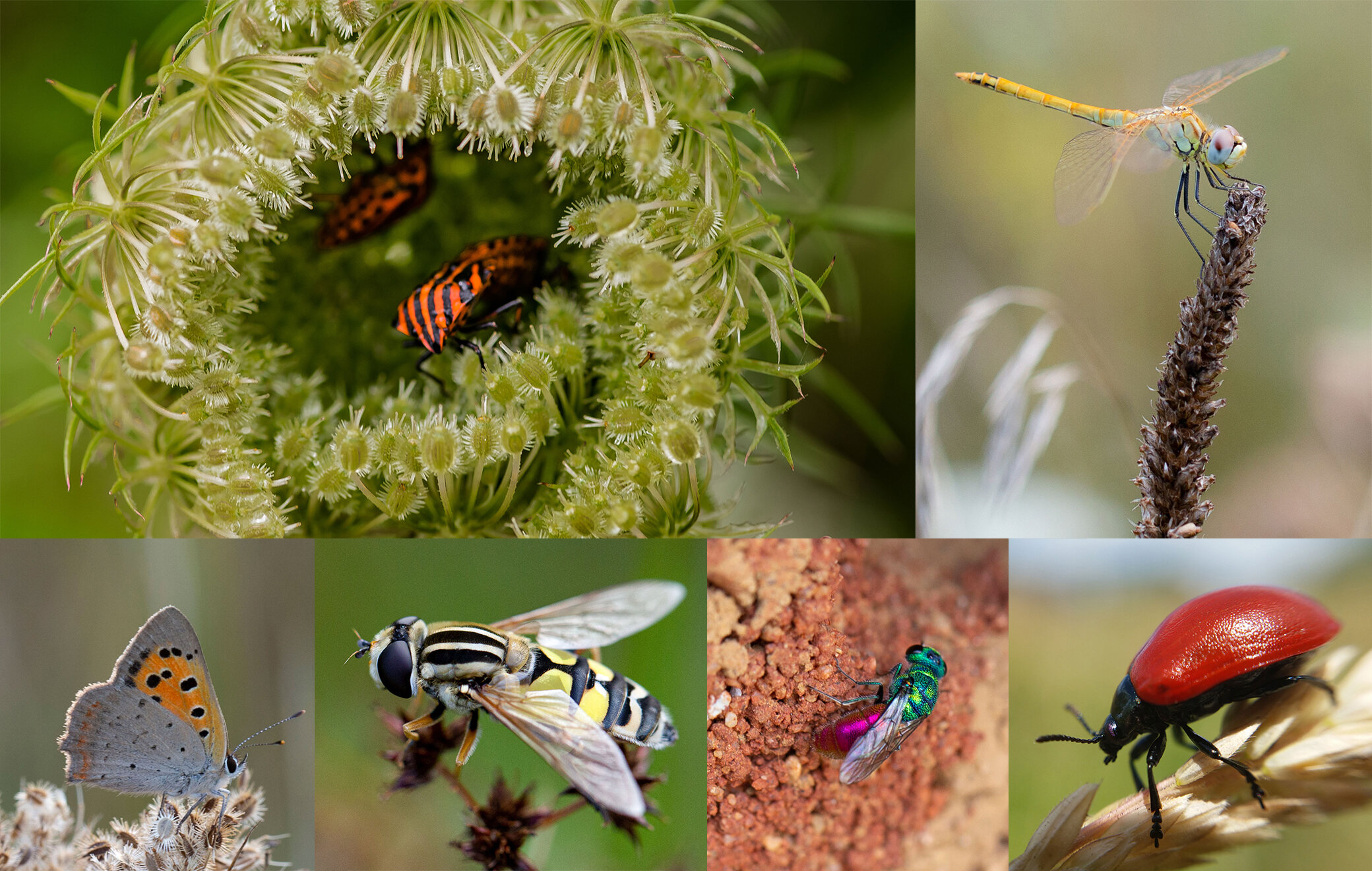photo of Researchers united on international road map to insect recovery image