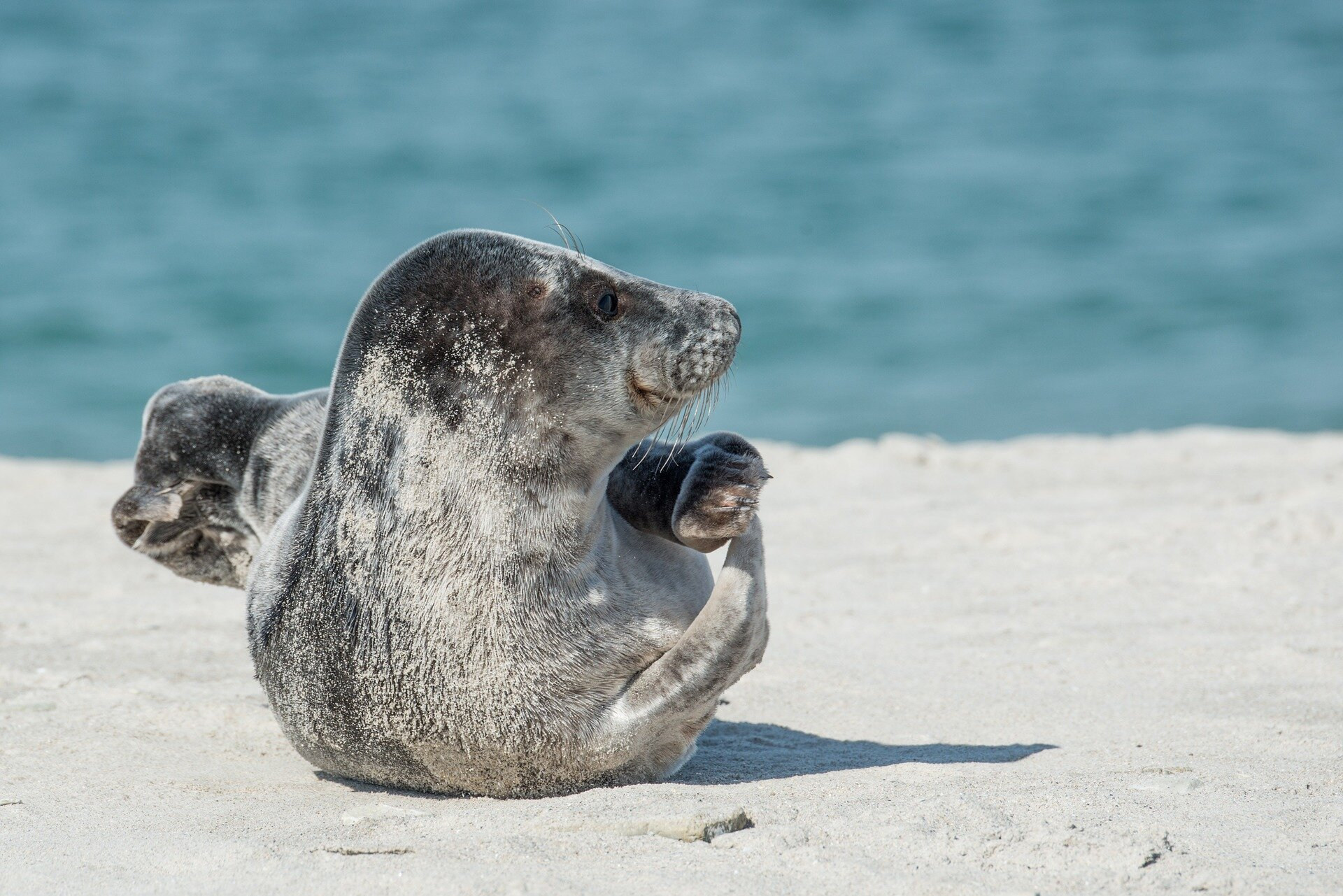 photo of Engineers and biologists join forces to reveal how seals evolved to swim image