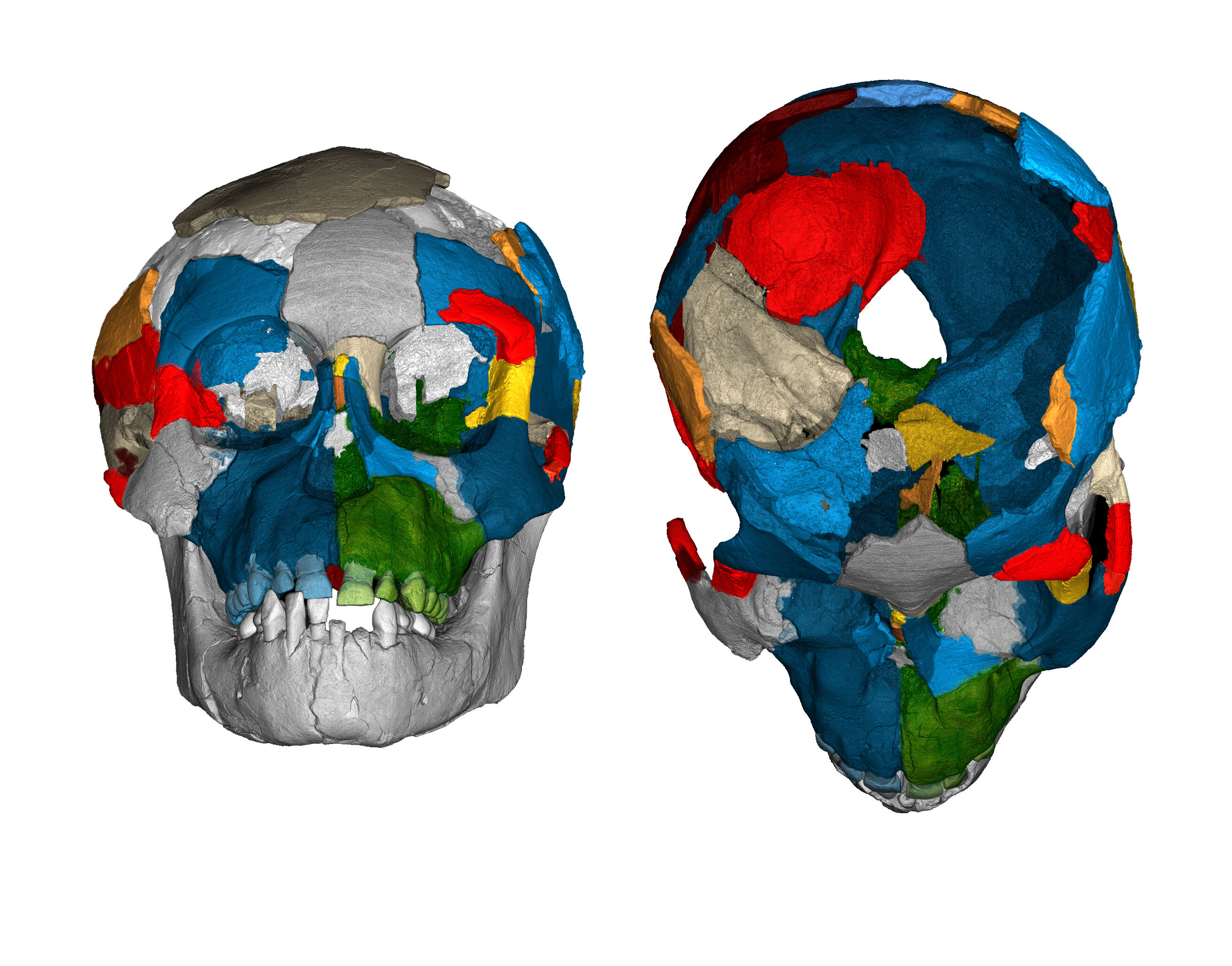 Skull scans reveal evolutionary secrets of fossil brains
