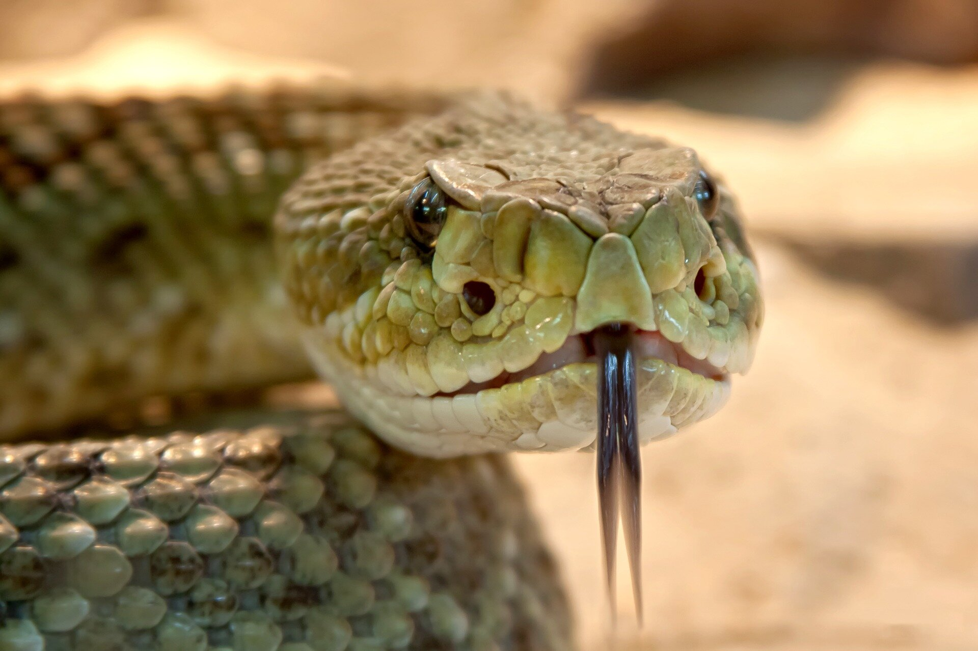 Tighten Up Law On Keeping Dangerous Snakes As Pets Demand Animal Welfare Experts