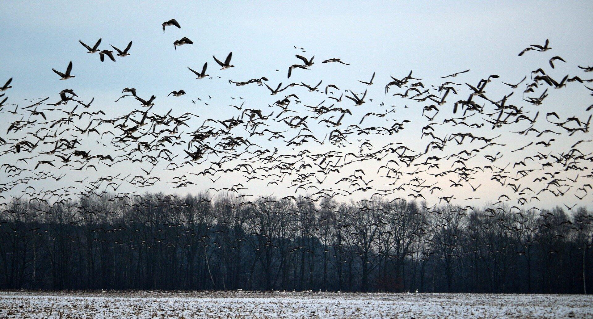 Predicting 50,000 years of bird migrations