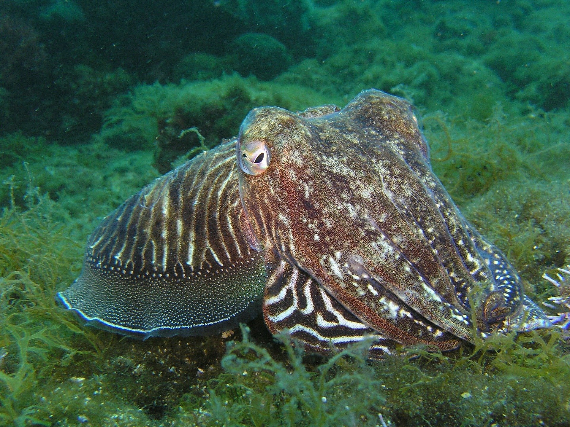 Squids' ability to tune color and brightness of their iridescence comes down to subtle mechanism - Phys.org