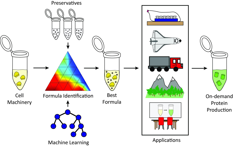 Stabilizing freeze-dried cellular machinery unlocks cell-free biotechnology