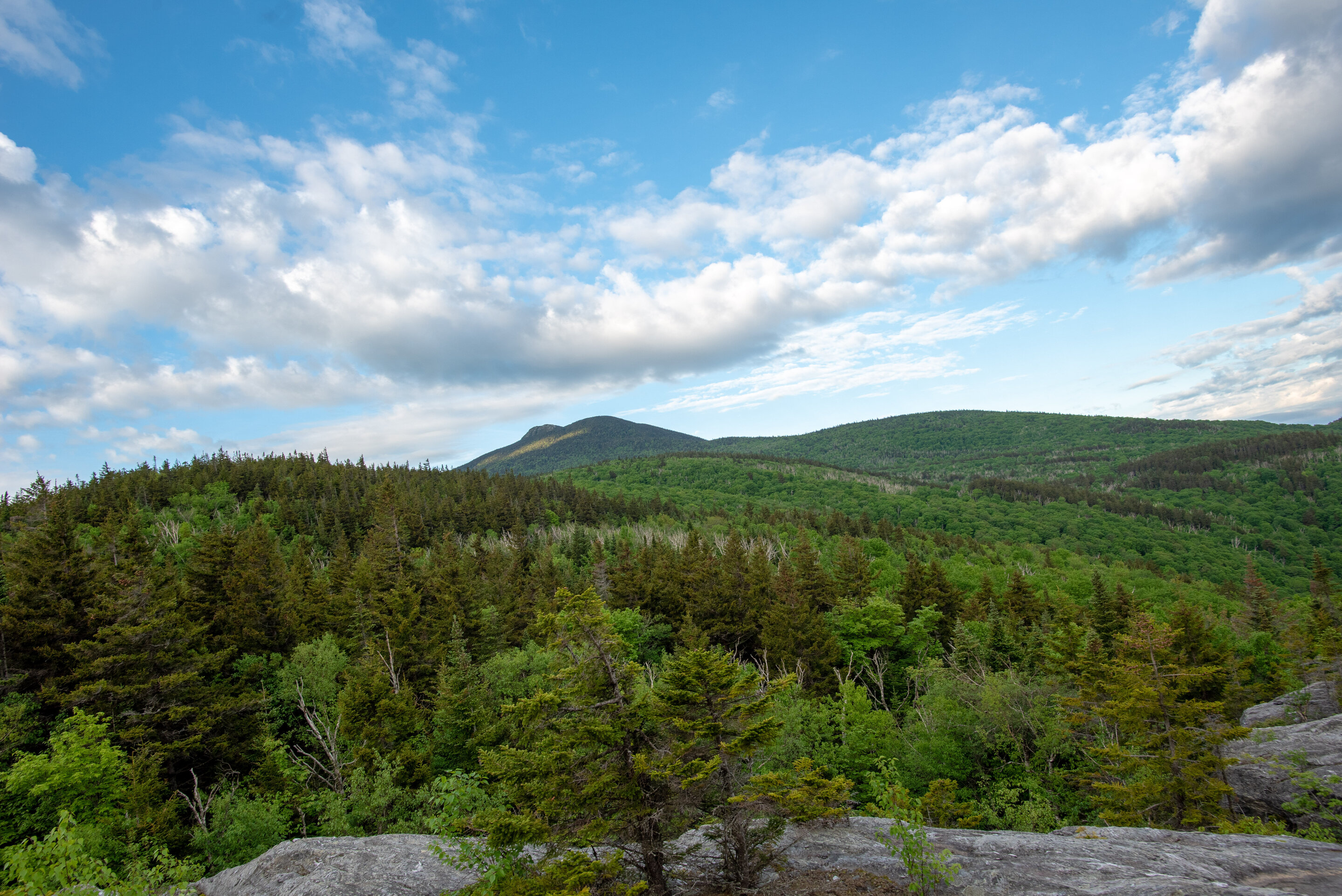 Vermont has conserved one third of the land needed for an ecologically functional future