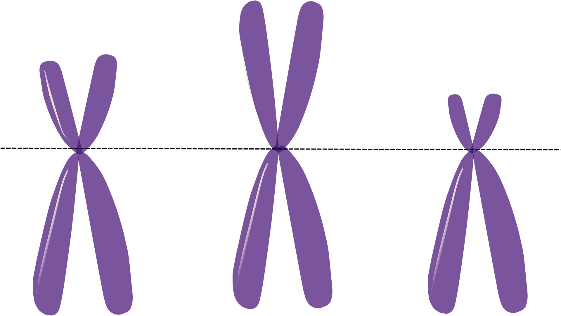 The male Y chromosome does more than we thought
