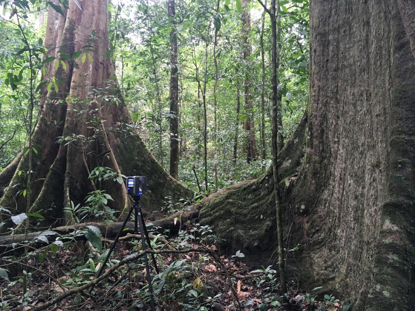 Forests of the world in 3-D: Research team analyses complexity of forest structure