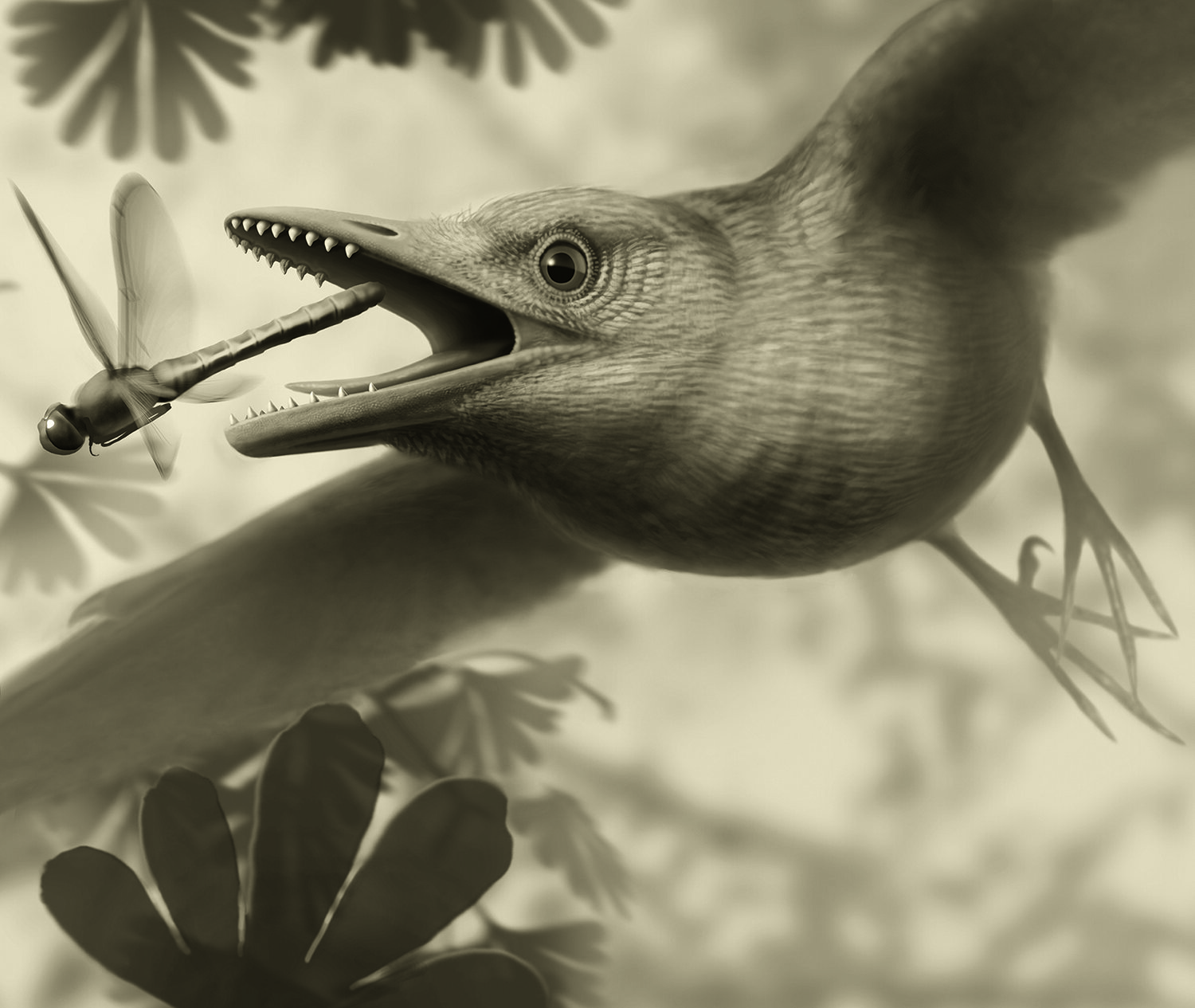 Quartz crystals in the stomach of fossil bird complicates the mystery of its diet - Phys.org