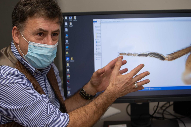 fruit flies win genetic race