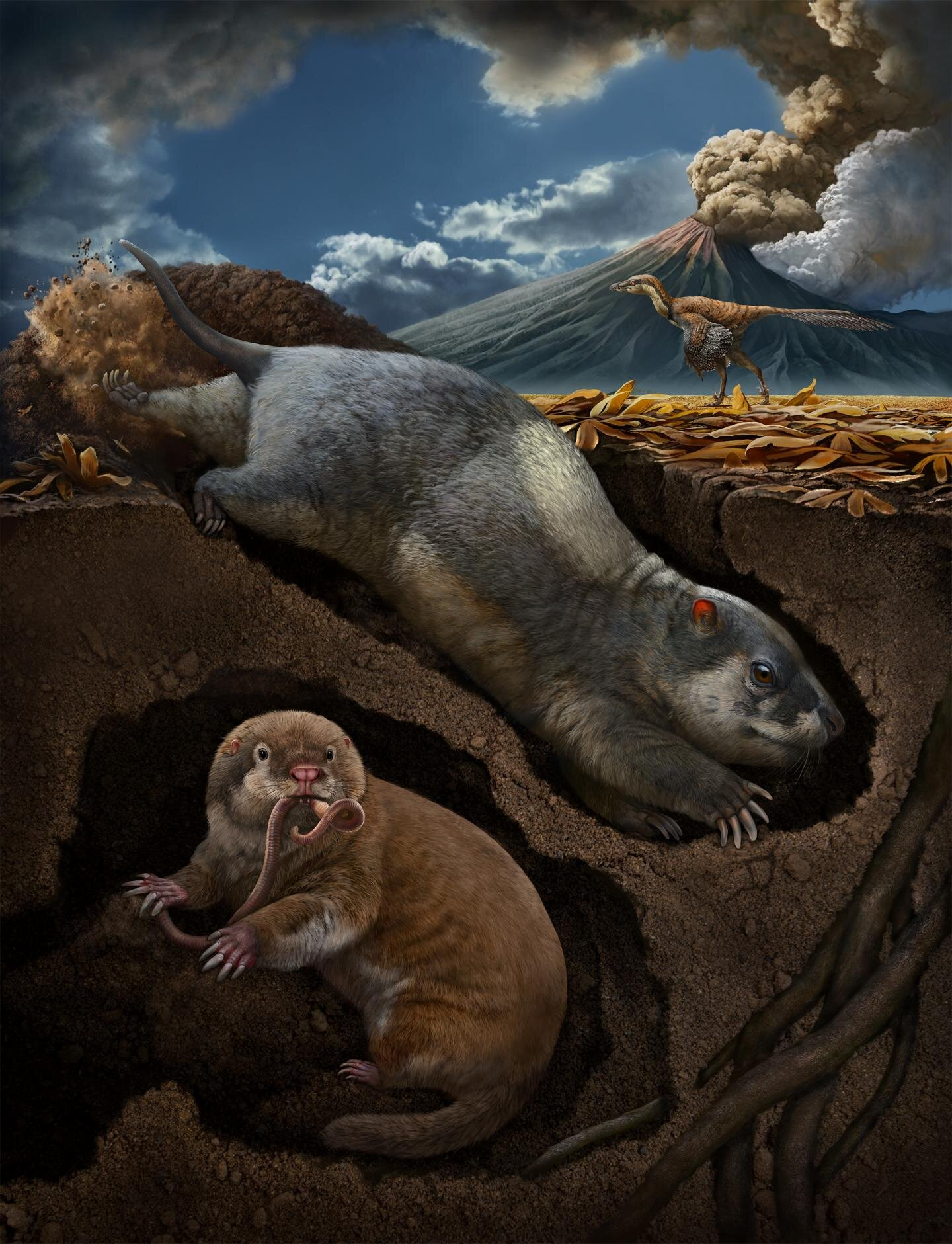 photo of Scientists discover two new species of ancient, burrowing mammal ancestors image