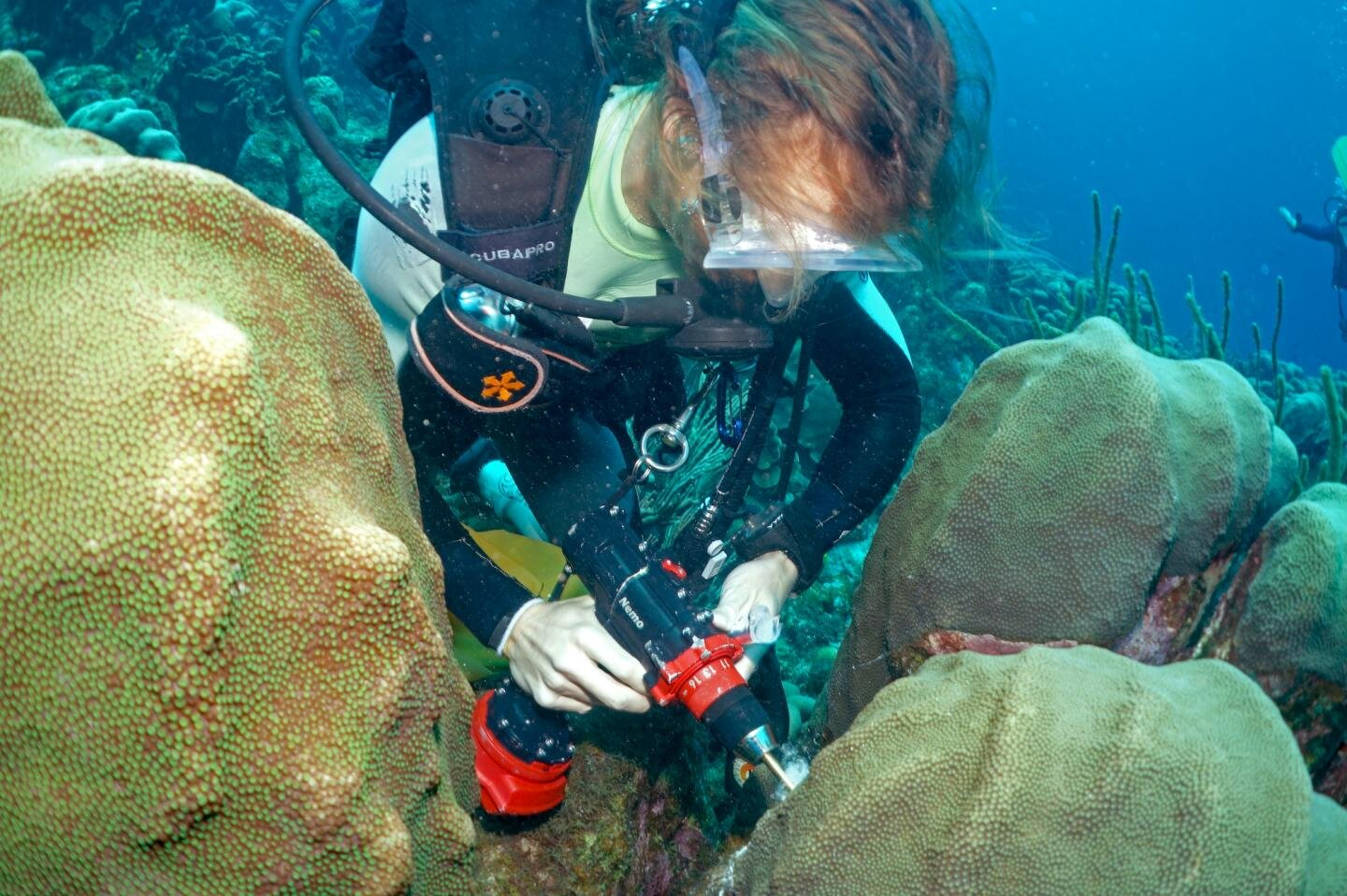 photo of 3D imaging creates molecular maps of hidden microbial communities on coral reefs image