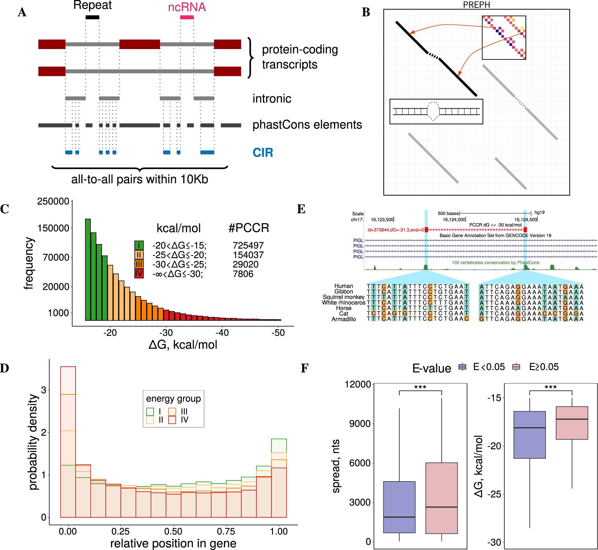 Scientists discover a new gene regulation mechanism