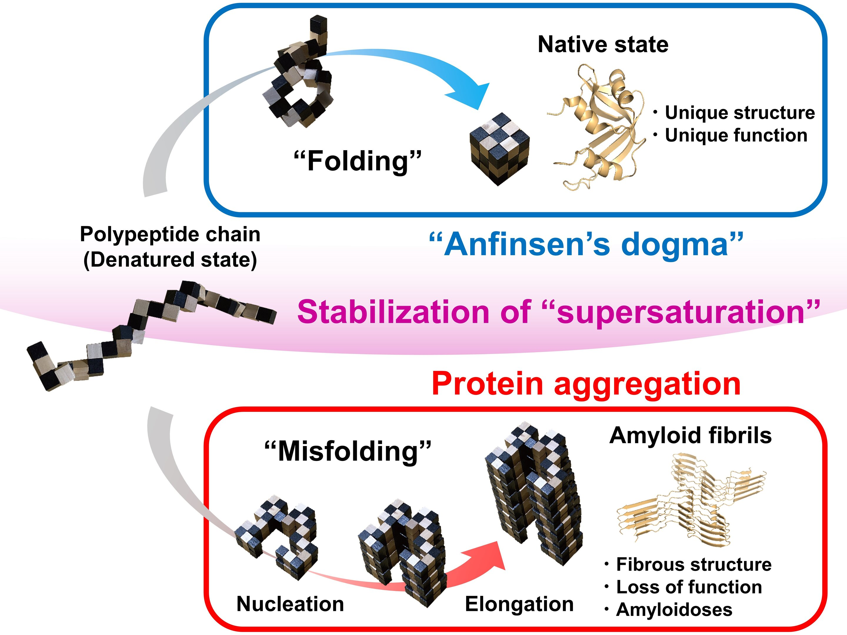 Barrier between folding and incorrect folding of proteins