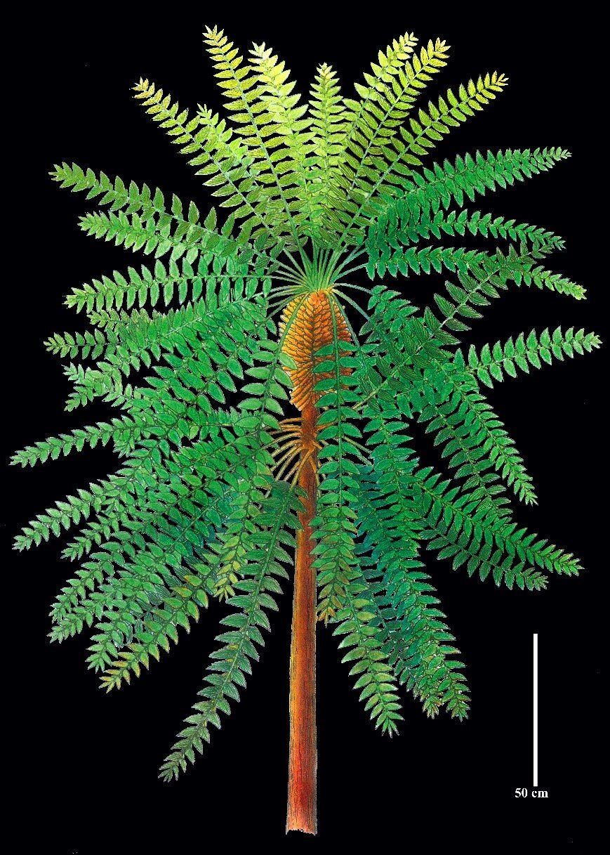 'Pompeii of prehistoric plants' unlocks evolutionary secret: study - Phys.org