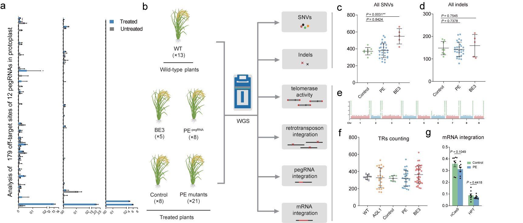Researchers demonstrate very high specificity of prime editors in plants