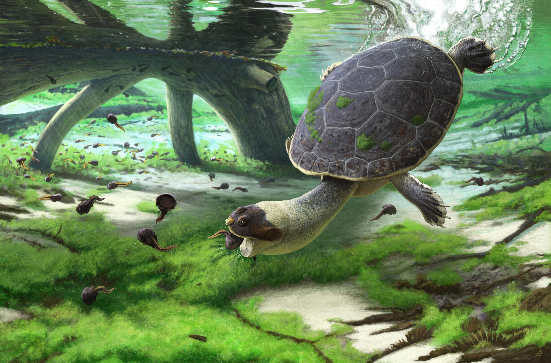 New species of pelomedusoid turtle found in Madagascar