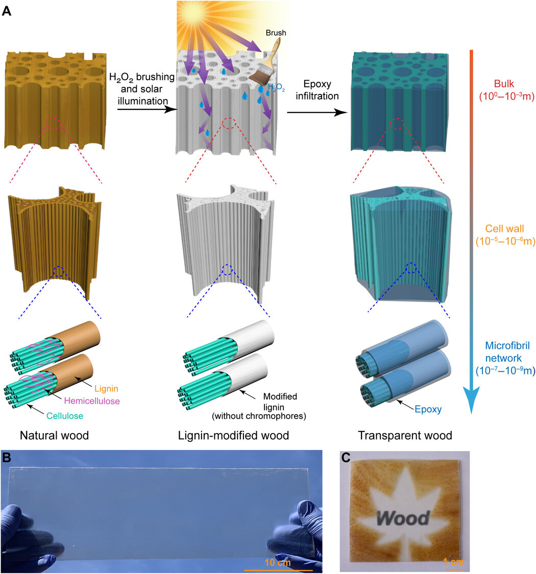 A new way to make wood transparent, stronger and lighter than glass
