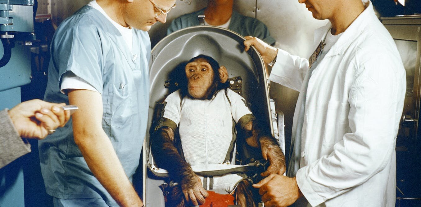 The life and death of the first space chimp