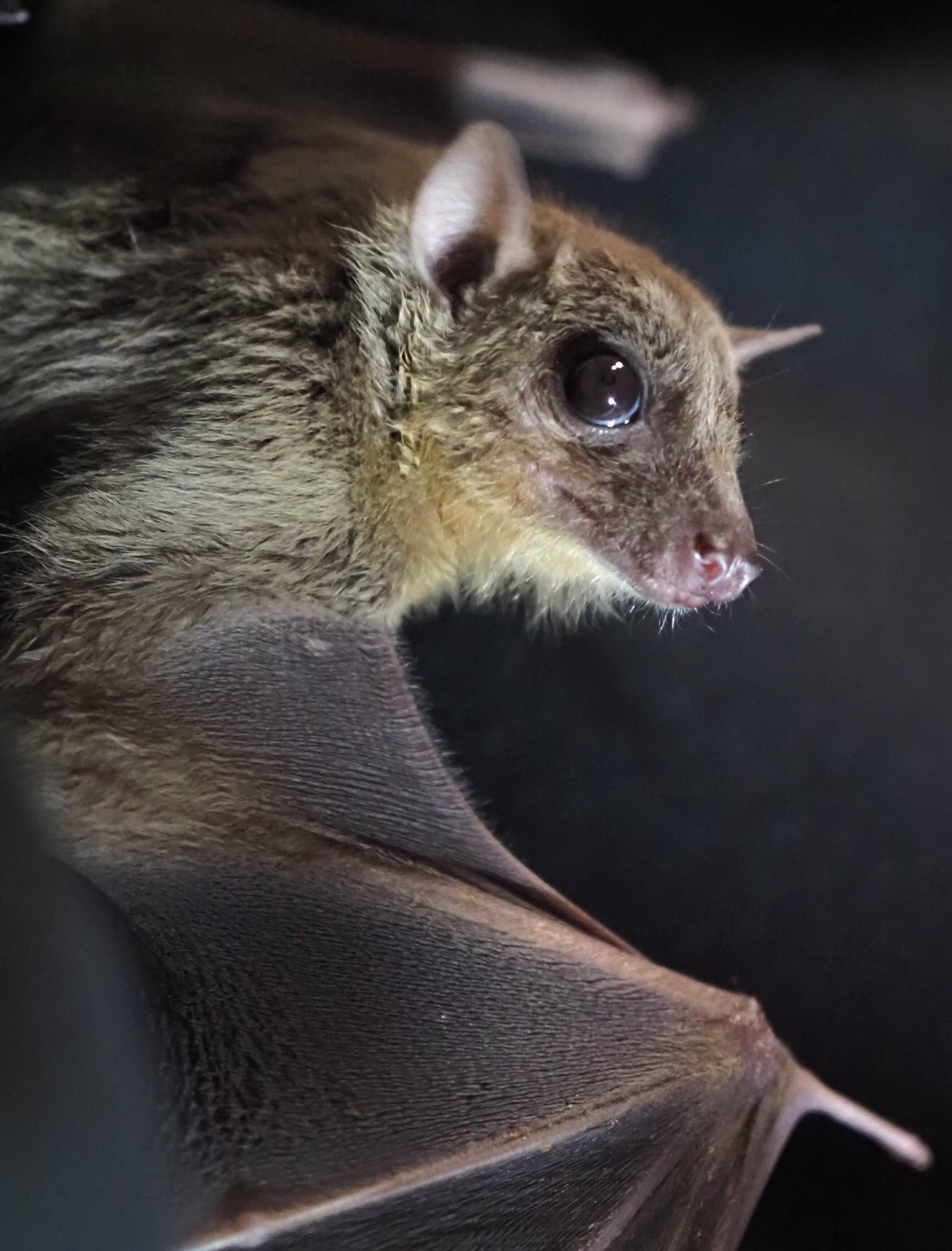 Bat study reveals secrets of the social brain