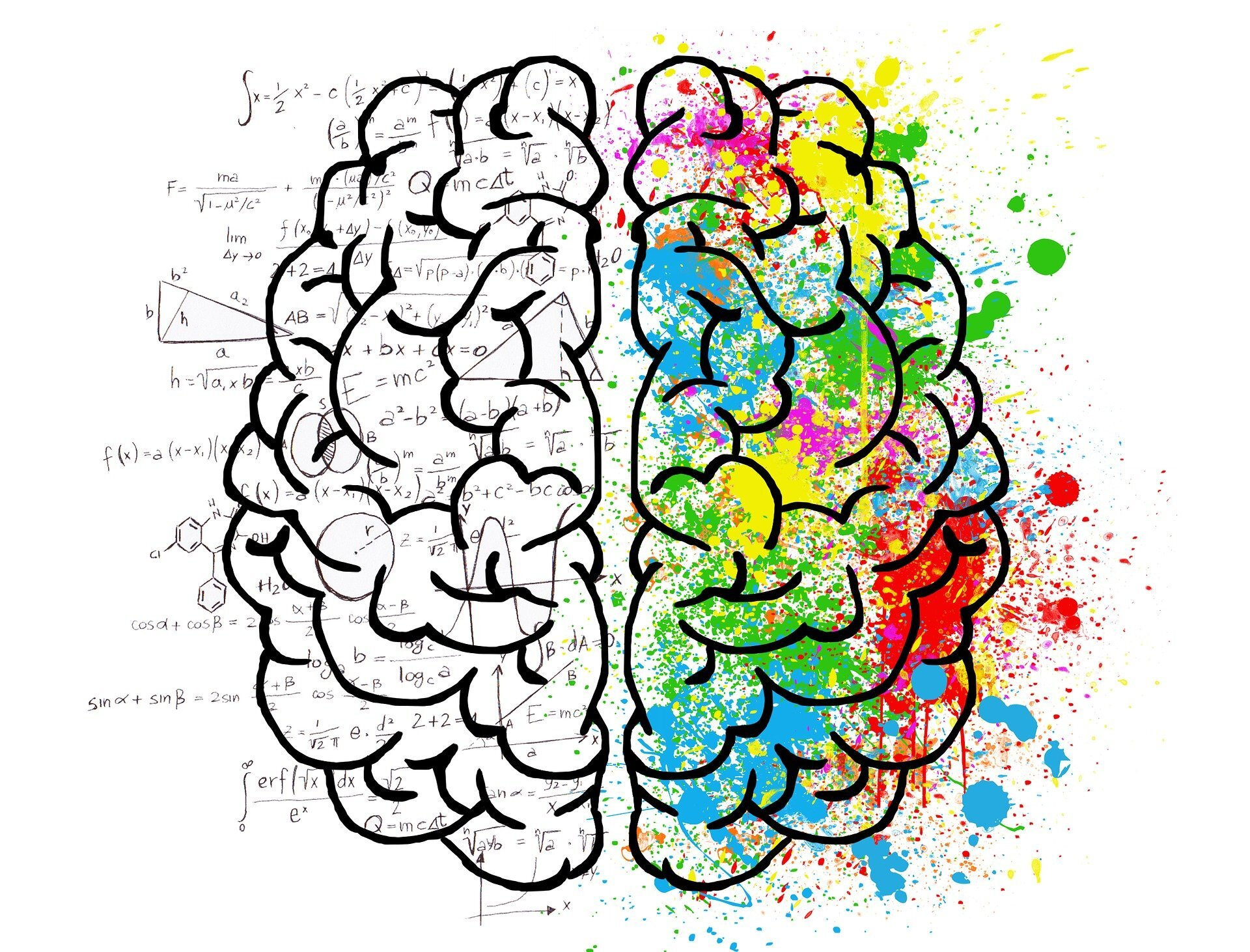 An individual's personality does not lie in their behavior or their genes but in the brain: study