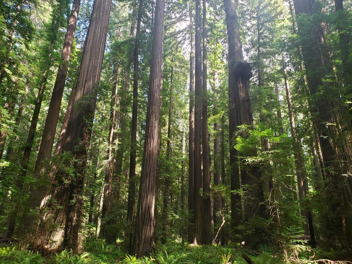 California's carbon mitigation efforts may be thwarted by climate