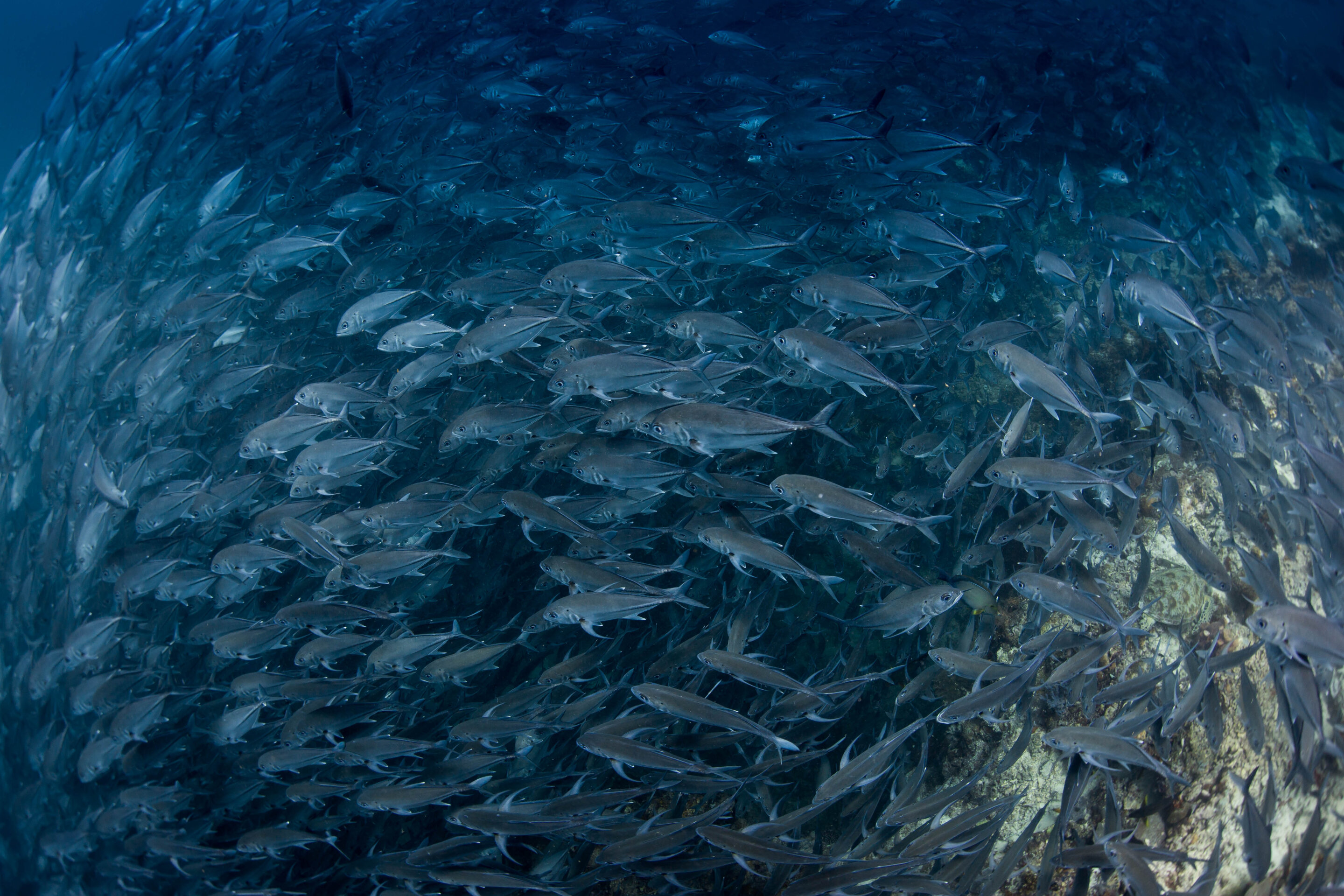 Climate change threatens food security of many countries dependent on fish