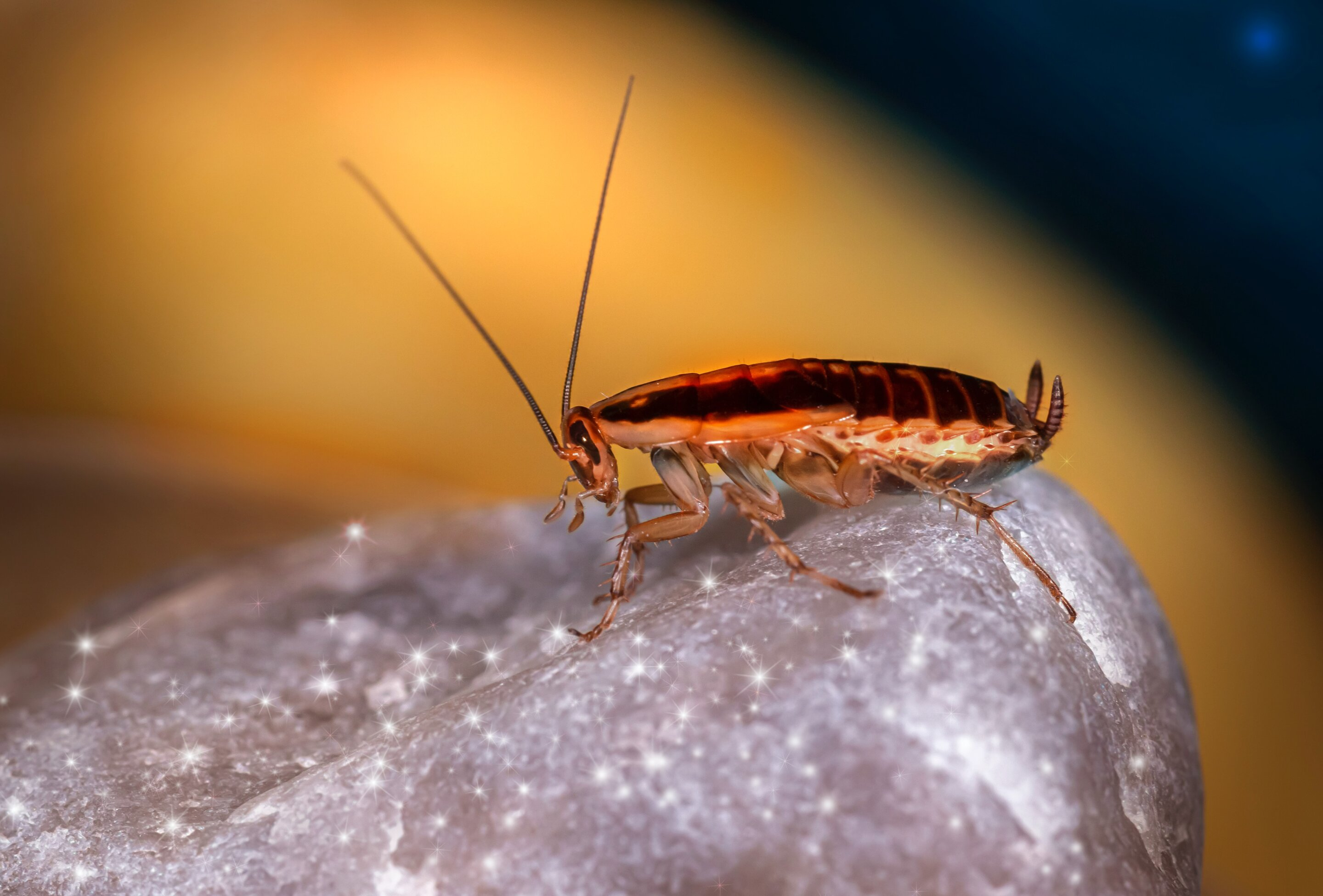Want to reduce cockroach sex? Block an enzyme