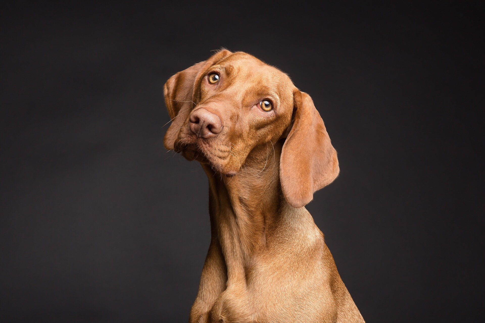 Dogs can tell when people are lying to them, study finds