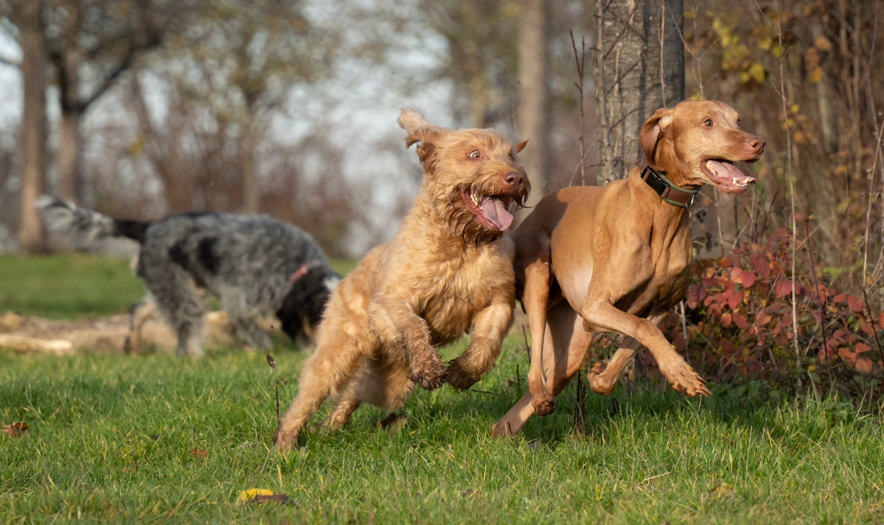 Animals laugh too, analysis of vocalization data suggests
