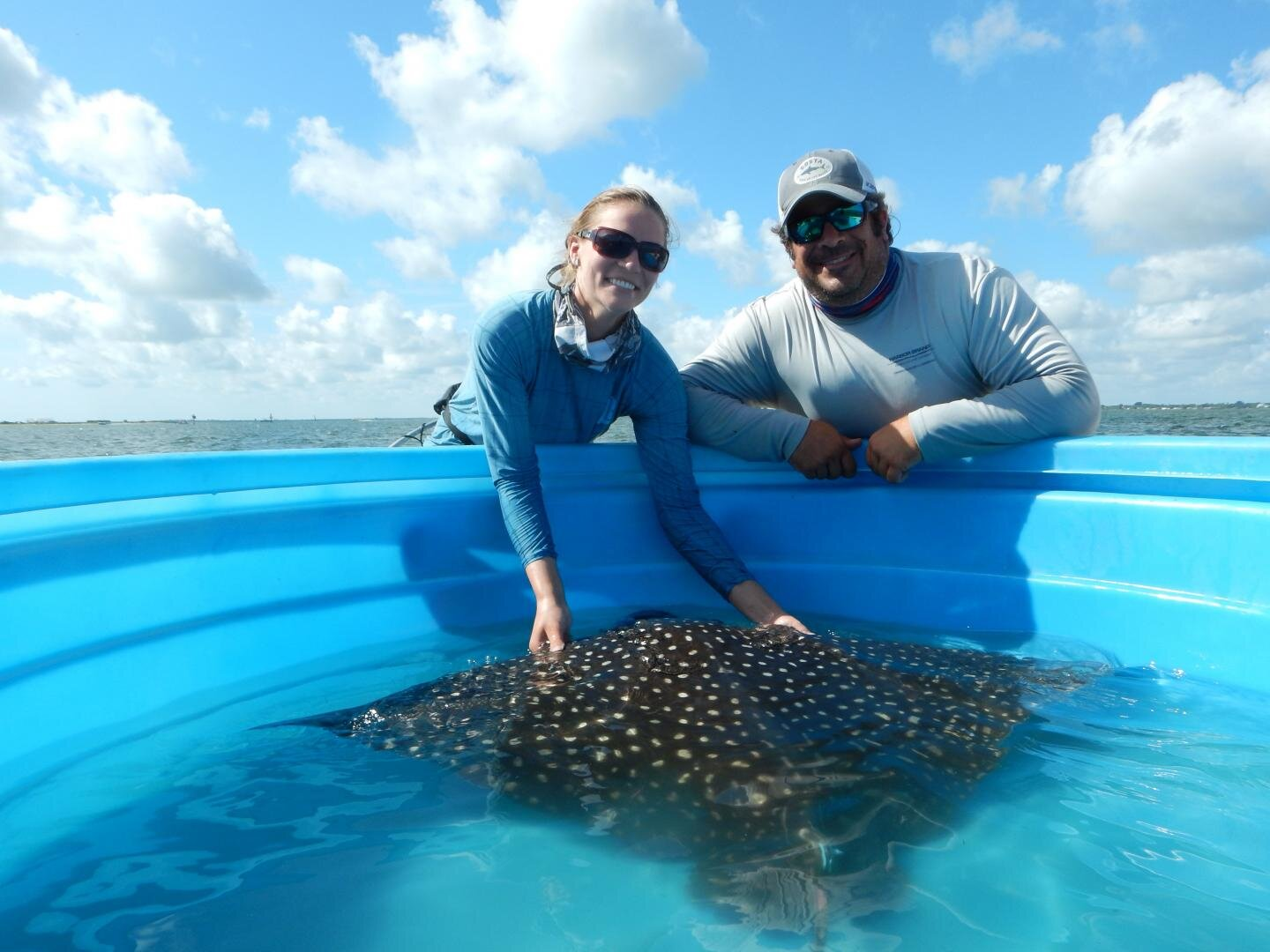 photo of Drifter or homebody? Study first to show where whitespotted eagle rays roam image