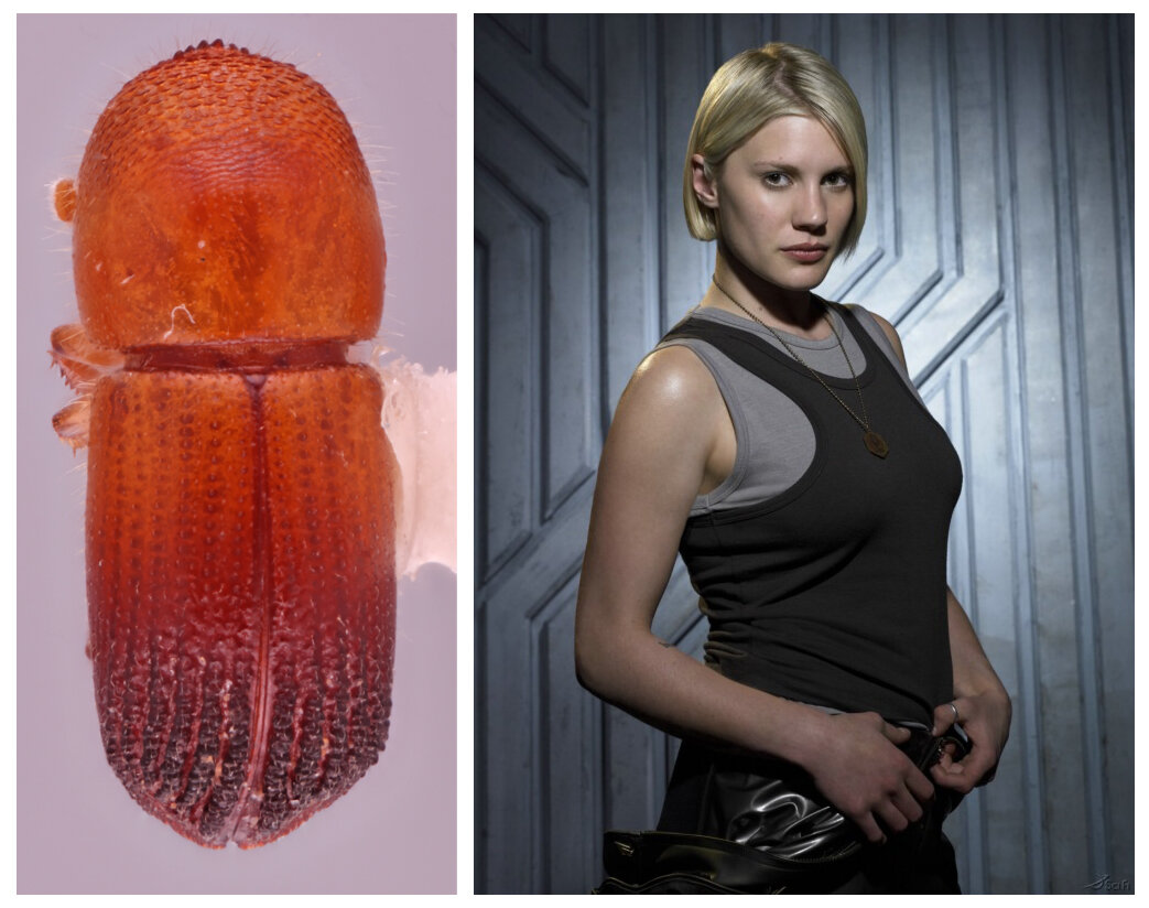 Entomologists discover dozens of new beetle species—and name some after iconic sci-fi heroines
