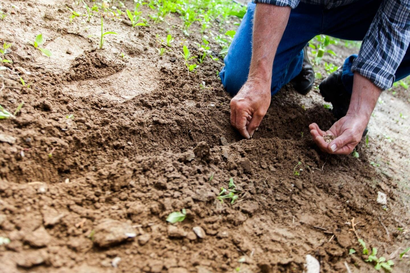 Image result for Facts on the ground: How microplastics in the soil contribute to environmental pollution