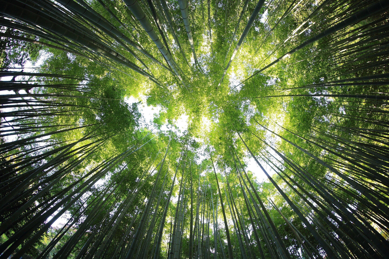Tropical forest soil captures carbon under elevated nitrogen deposition
