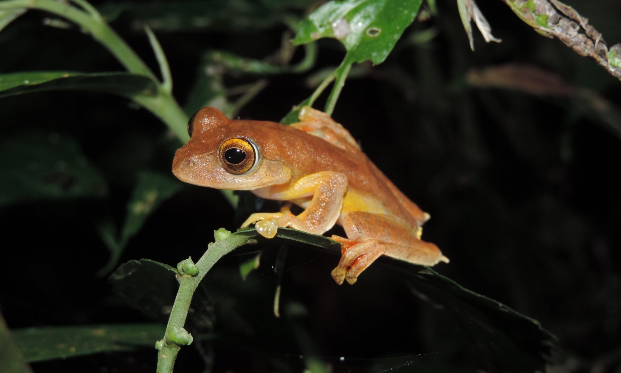 photo of Funding front-line action for the world's forgotten frogs image