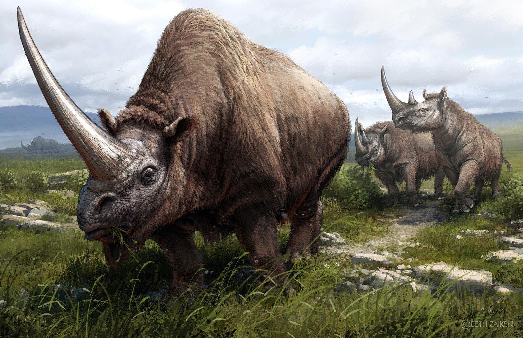 Geneticists map the rhinoceros family tree