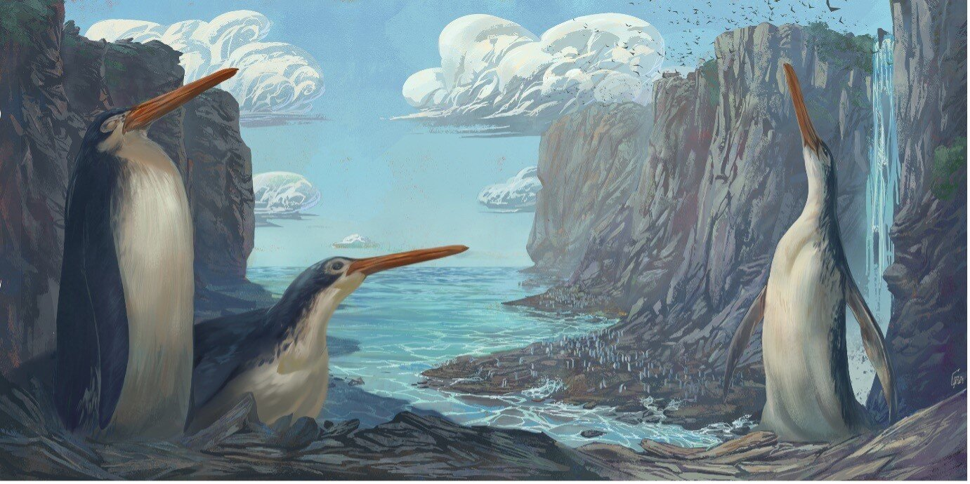 Researchers Say Giant Fossilized Penguin Discovered by New Zealand Schoolchildren in 2006 is a New Species